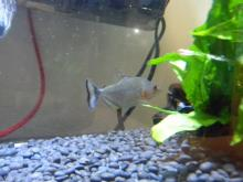 お魚GOGO☆はじめの一歩