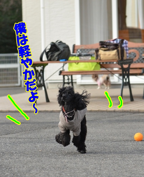 DSC_4250_20130117211501.jpg