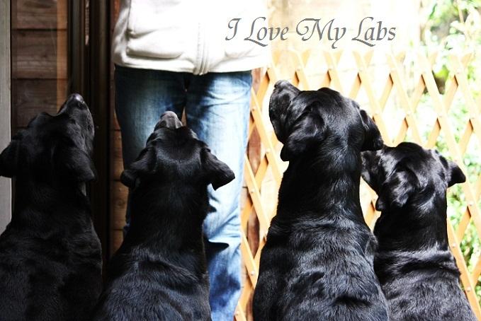 IMG_1639 (2)LOVE