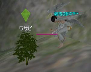 カゼブロ栽培05
