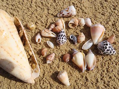 120303-久志の貝殻