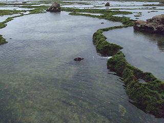 変わった岩礁