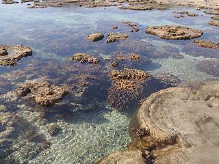 再びサンゴ礁へ02