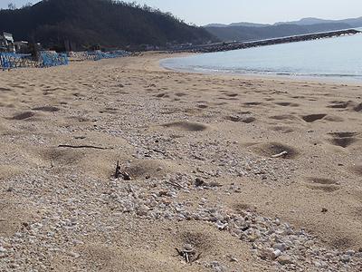 東江の人工ビーチ