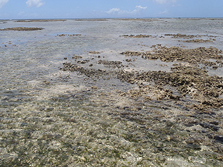 藻場と岩場