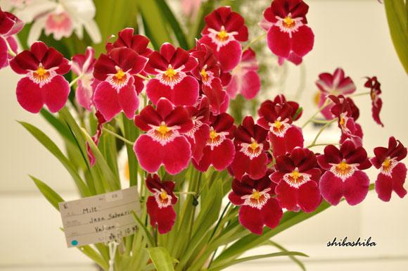 花フェスタ札幌