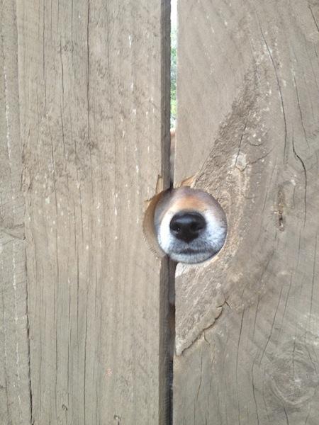 穴から穴1