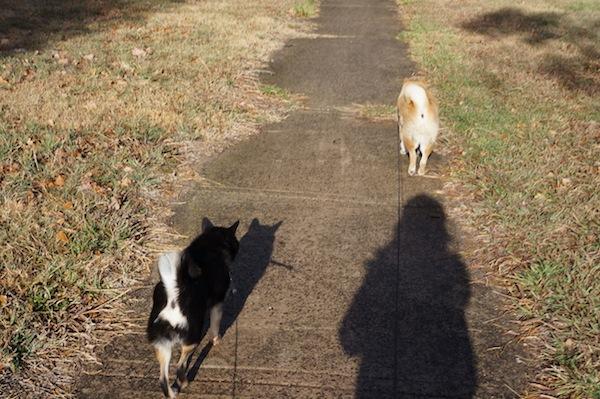 今日のお散歩4