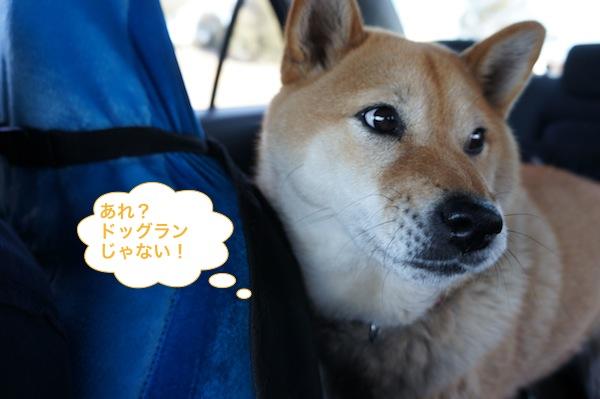 wakuwaku wash 6
