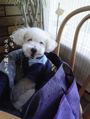 Image326a_20110821192920.jpg