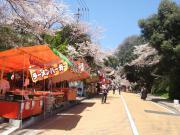 2012_0407花見0013