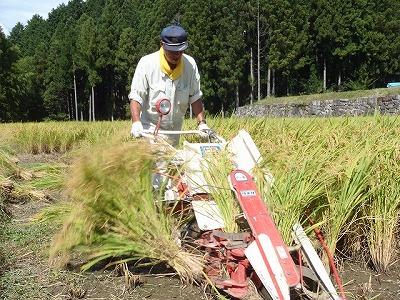 24年9月稲刈りはざ干し 003