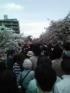 2012桜人手