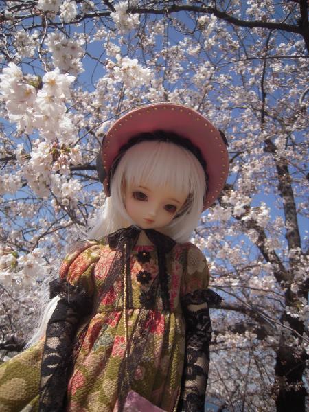 くるみ 桜2