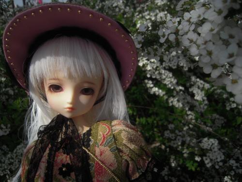 くるみ 桜4