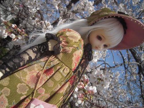 くるみ 桜7a