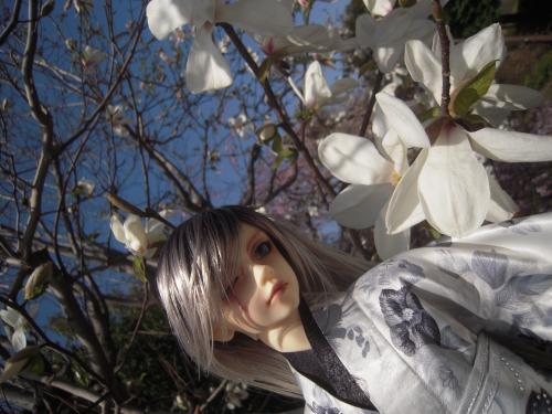 レイズナー 桜1