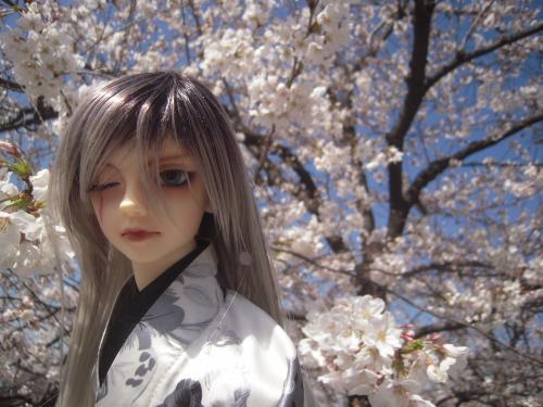 レイズナー 桜4