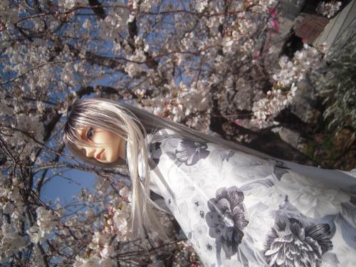 レイズナー 桜5