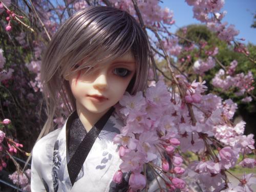 レイズナー桜3