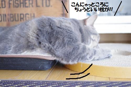 a1shomama3.jpg