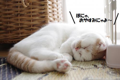 a1shomama8.jpg