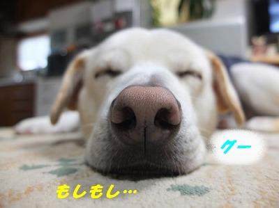 DSCF9846.jpg