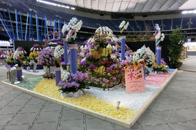 オープンクラス 奨励賞 埼玉県洋蘭生産者組合