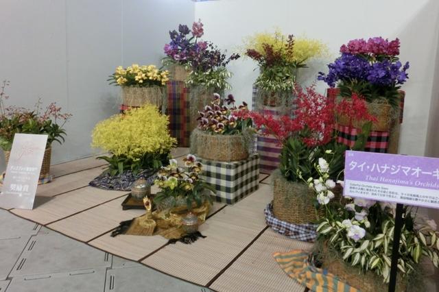 オープンクラス 奨励賞 タイ・ハナジマオーキッド