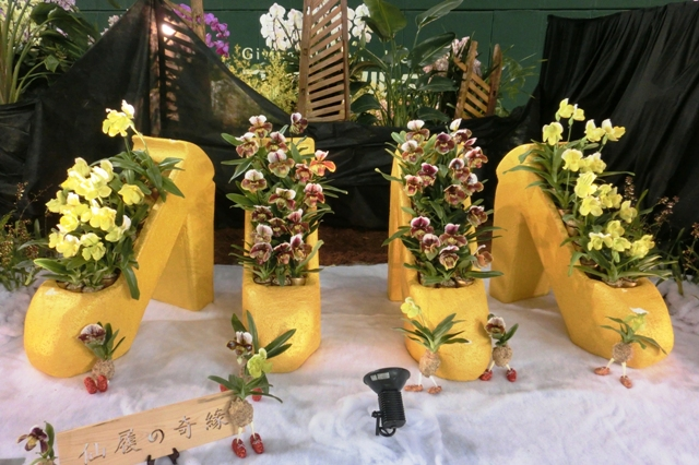 オープンクラス トロフィー賞 ココアオーキッドファーム