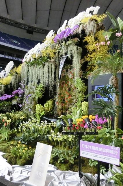 オープンクラス 最優秀賞 日本洋蘭農業協同組合
