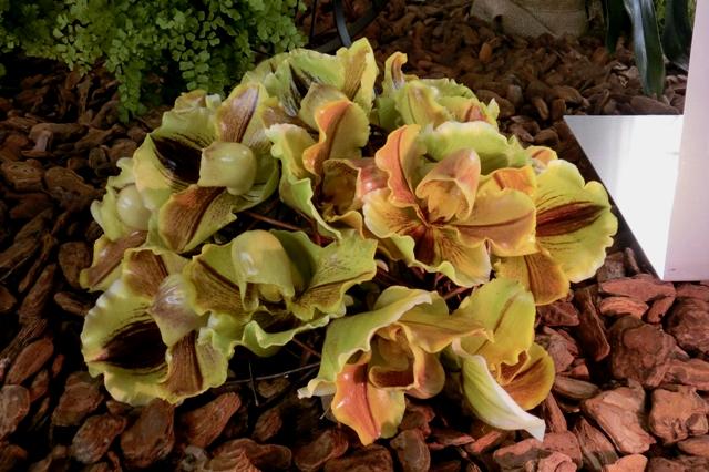 オルヒデーン デュアブッシュのパフィオの切花を使ったディスプレイ