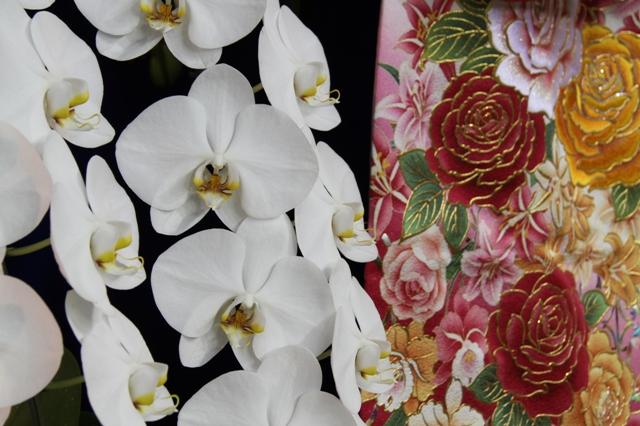 胡蝶蘭を使ったディスプレイ