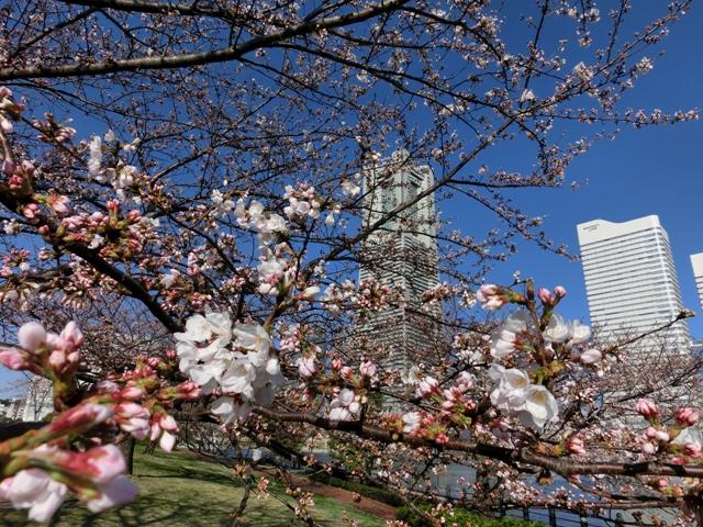 汽車道から見た横浜ランドマークタワー