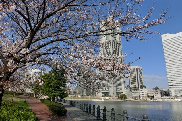 運河パークから見た横浜ランドマークタワー