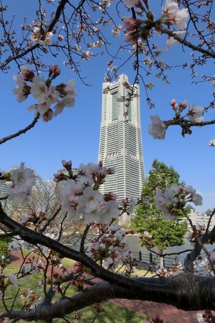 桜越しに見る横浜ランドマークタワー
