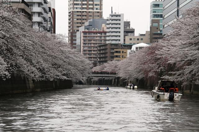目黒川お花見クルーズ 橋の上も花見客で一杯