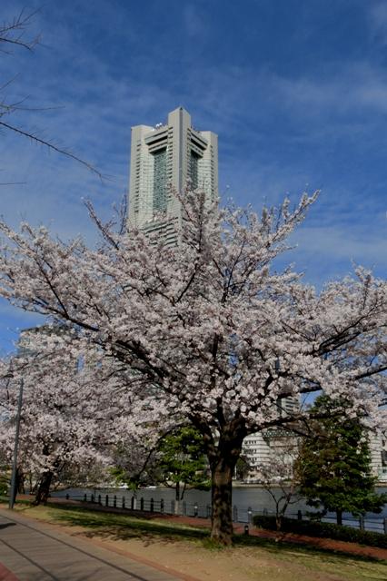 人生の門出を祝福する桜