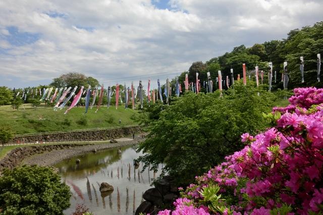 茅ヶ崎里山公園のこいのぼり
