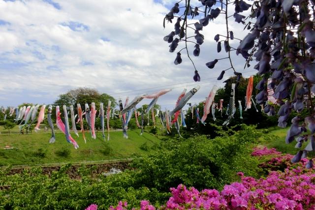 茅ヶ崎里山公園 多目的広場周辺