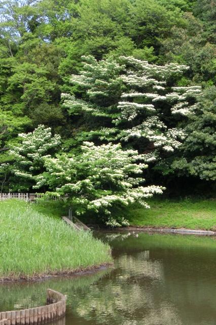 茅ヶ崎里山公園 芹沢の池