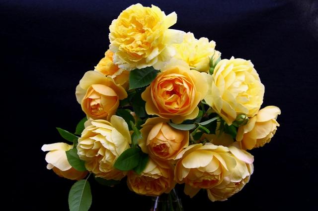 黄色の切り花