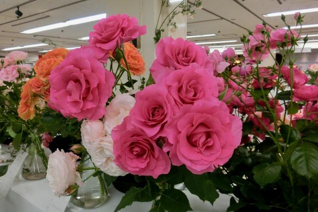 うらら(ピンク)と花ぼんぼり(白)