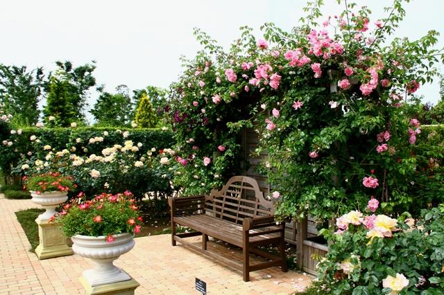 バラに囲まれたベンチ