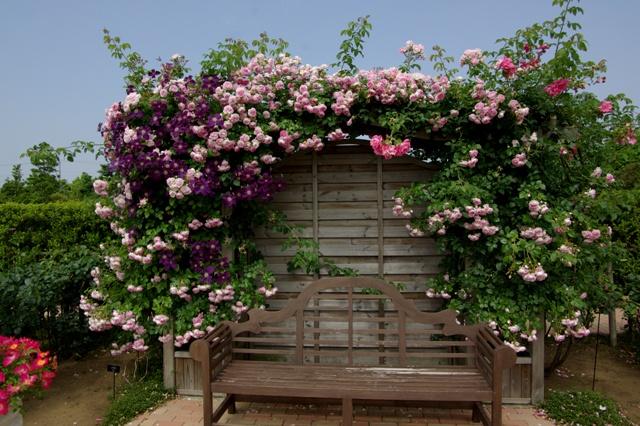 バラとクレマチスに囲まれたベンチ