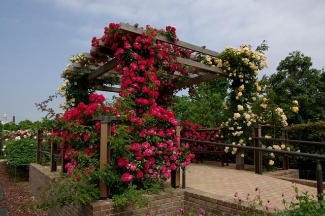 花いっぱいのパーゴラ
