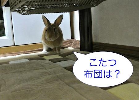 DSC_9108.jpg