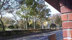 秋ーー1 (2)