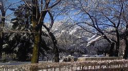 雪景色ーー3 (2)