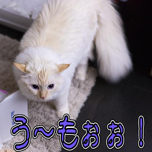 20120529_1.jpg